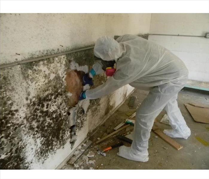 Large Loss  - Mold Remediation